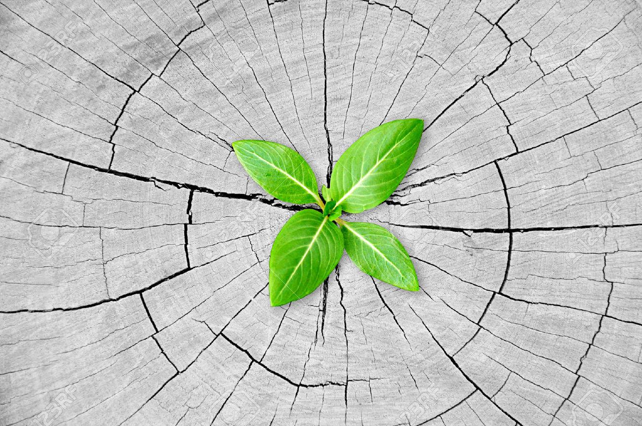Déforestation: des pistes d'espoir !